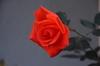 40d_20071202_999_44dpp
